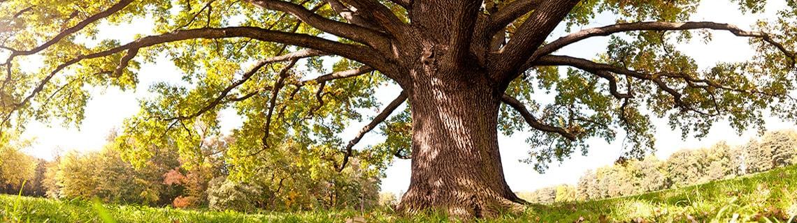 arboriculture-main